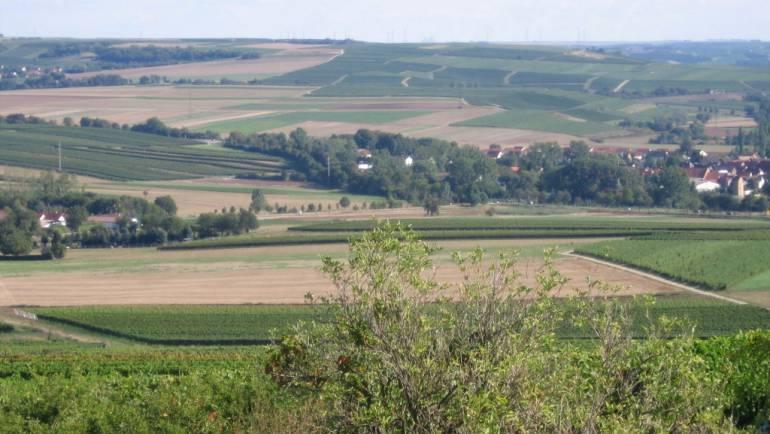 Wanderung durch Rheinhessen