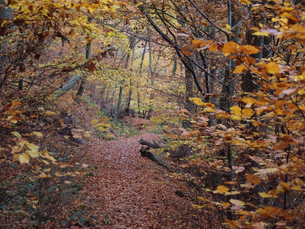 Herbst-Wanderung im Binger Wald 2021